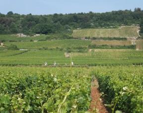 Escapade nature au cœur du vignoble